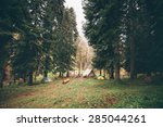 Coniferous Forest With Camping...