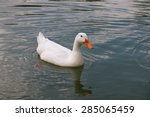 white duck | Shutterstock . vector #285065459