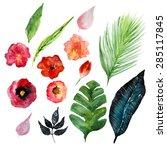 vector  watercolor tropic... | Shutterstock .eps vector #285117845