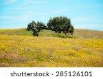 Old Lonely Oak Tree On Field...