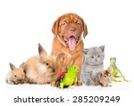 Group Of Pets Together In Fron...