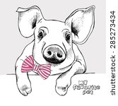 Portrait Of A Small Pig With A...
