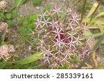 star of persia  or persian...