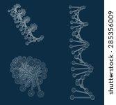 dna spiral vector model | Shutterstock .eps vector #285356009