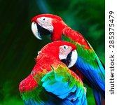 Beautiful Parrot Bird ...