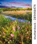 Colorful Texas Wildflowers In...