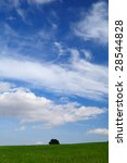 background with green field ... | Shutterstock . vector #28544828