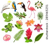 exotic tropical leaves and... | Shutterstock .eps vector #285465251