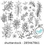 set of herbs  hand drawn nature ... | Shutterstock .eps vector #285467861