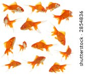 beautiful goldfishes on white... | Shutterstock . vector #2854836