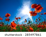 poppy flower in the sky | Shutterstock . vector #285497861