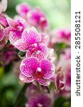 purple orchid in the park with... | Shutterstock . vector #285508121