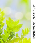 blurry green bokeh with leaves | Shutterstock . vector #285514049