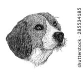 image of beagle hand drawn... | Shutterstock .eps vector #285534185