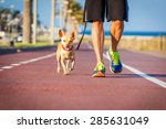 Stock photo chihuahua dog close together to owner walking with leash outside at the park as friends 285631049
