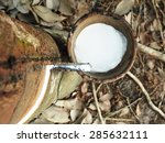milky latex extracted from... | Shutterstock . vector #285632111