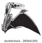 pterodactyl  vintage engraved... | Shutterstock .eps vector #285661301