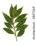 bay leaf fragrant culinary... | Shutterstock . vector #2857265