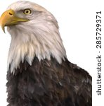 portrait of a bald eagle  lat.... | Shutterstock .eps vector #285729371