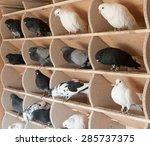 Birds  Doves In The Dovecote