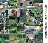 collage of some wild animals | Shutterstock . vector #285770285