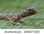 macro profile image of a cute... | Shutterstock . vector #285877205