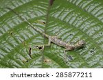 close up full body top view... | Shutterstock . vector #285877211