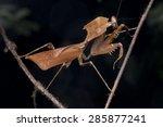 macro side view shot of a dead... | Shutterstock . vector #285877241