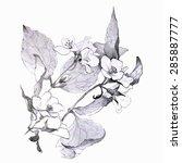 flower sketch. isolated on...   Shutterstock .eps vector #285887777