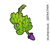 Bunch Of Unripe Bananas In Color