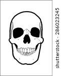 cool skull illustration  vector ... | Shutterstock .eps vector #286023245