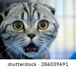 shocked cat | Shutterstock . vector #286039691