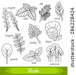 vector illustration of 10 fresh ... | Shutterstock .eps vector #286228424