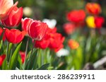 spring background with colorful ... | Shutterstock . vector #286239911