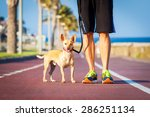 Stock photo chihuahua dog close together to owner walking with leash outside at the park as friends 286251134