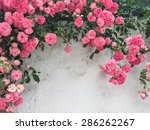 Stock photo pink roses against a white wall with copy space 286262267
