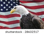 majestic bald eagle looking... | Shutterstock . vector #28632517