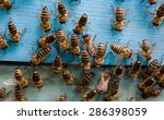 the bees and the queen bee on... | Shutterstock . vector #286398059