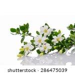 gardenia   Shutterstock . vector #286475039