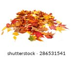 Autumn Leaves Isolated On The...
