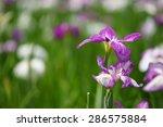 calamus | Shutterstock . vector #286575884