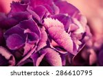 purple garden flowers background | Shutterstock . vector #286610795