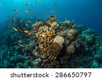 tropical fish on background of... | Shutterstock . vector #286650797