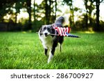 happy dog playing outside and... | Shutterstock . vector #286700927