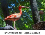 scarlet ibis  eudocimus ruber ...   Shutterstock . vector #286732835
