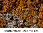 Lichen Texture Pattern...