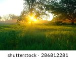 misty meadow spring at sunrise | Shutterstock . vector #286812281