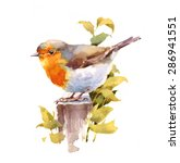 Watercolor Bird Robin Hand...