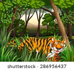 Scenery Of A Tiger Walking In ...
