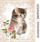 Vintage Card With Fluffy Kitte...